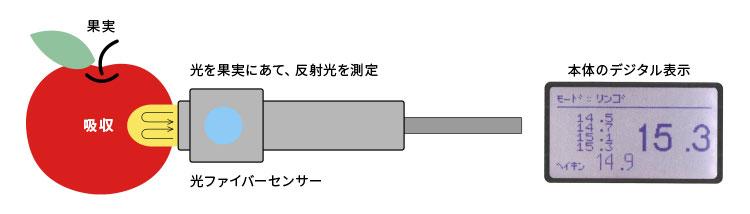 アマミールの基本構造